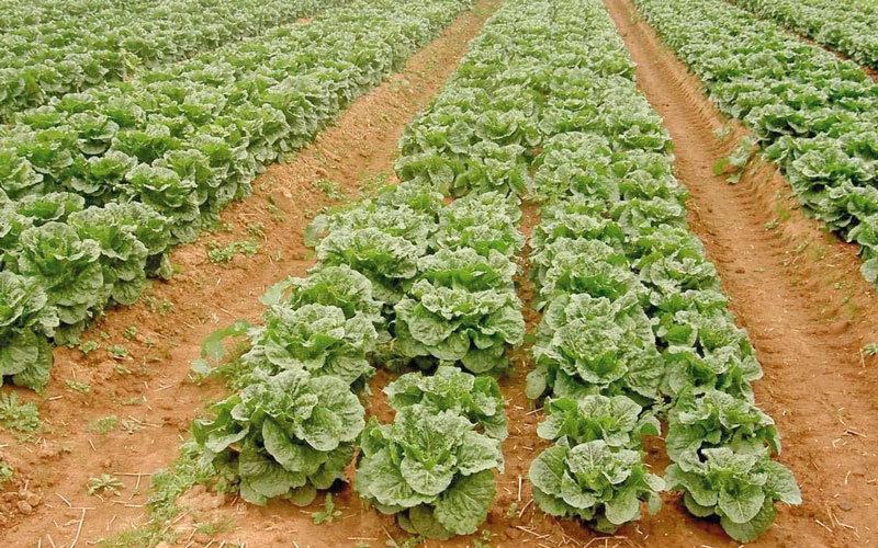 الصورة: الإمارات ترفع الحظر عن استيراد الخضراوات من الأردن