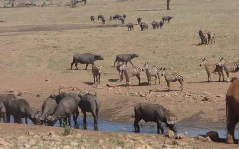 الصورة: باتريك.. «رجل المياه» منقذ حيوانات كينيا