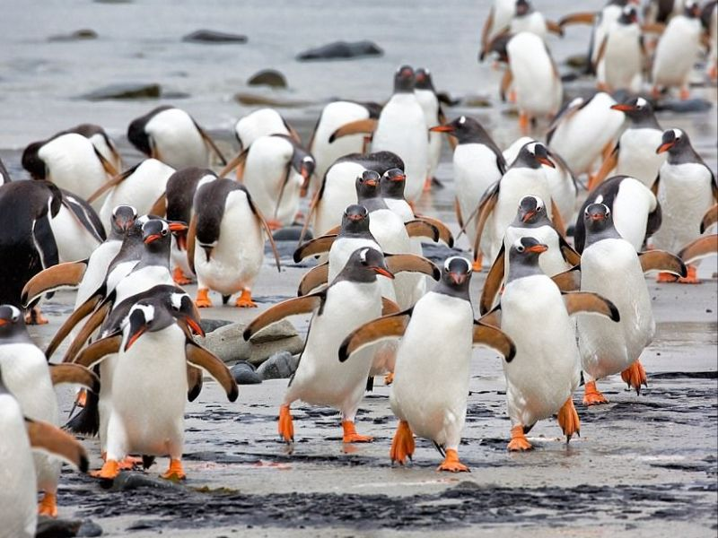نشر مصور القطب الجنوبي إيرا ماير  افضل  الصور  المفضلة له لطائر البطريق والتى قام بتوثيقها  لأكثر من عقد من الزمان.