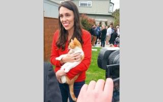 الصورة: القطة النيوزيلندية «الأولى» تقضي في حادث