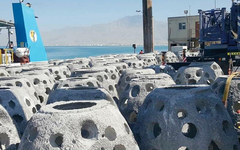 الصورة: إنزال 700 كهف صناعي في المرجان   والرمس والمعيريض