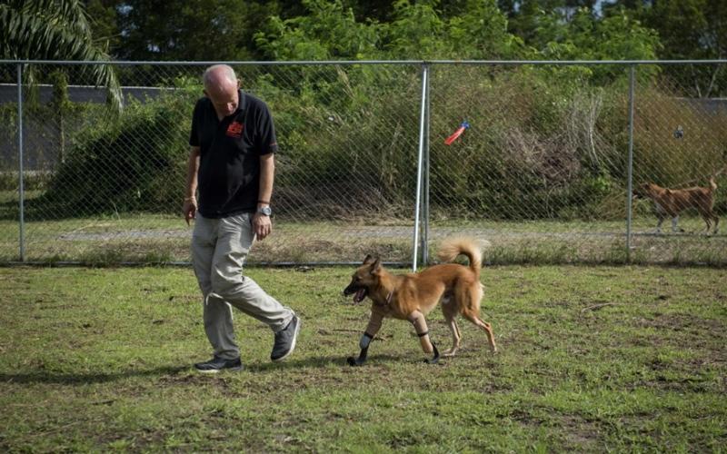 الصورة: بالصور .. كلب يسير بساقين اصطناعيتين