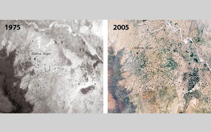 غابة ياكوبا غيَّرت تماماً المناخ المحلي للمنطقة. الإمارات اليوم