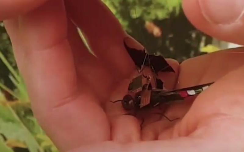 """الصورة: بالفيديو.. تعرف إلى اليعسوب """"الجاسوس"""""""