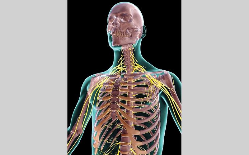 الصورة: إضاءة الجسم من الداخل.. لعلاج السرطان