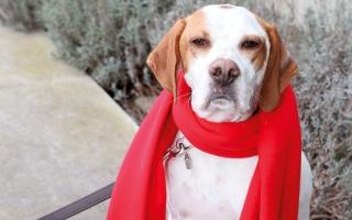 الصورة: حزب ألماني ينخدع ويوافق على ضم كلبة إلى عضويته