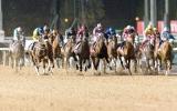 110 خيول تتنافس على ألقاب النسخة الـ 23 من كأس دبي العالمي