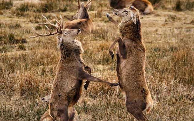"""الصورة: بالصور.. """"مباراة ملاكمة"""" غير تقليدية"""
