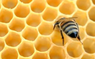 الصورة: «صمغ النحل» تحارب البثور   وتَهيُّج البشرة