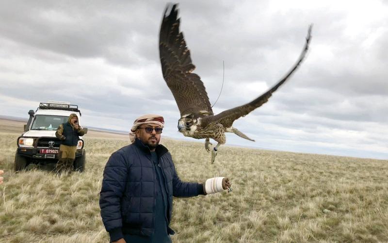 الصورة: «بيئة أبوظبي»: إطلاق 68 صقراً برياً  في كازاخستان