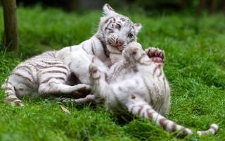الصورة: بالصور...لقطات من حديقة أمنيفيل للحيوانات في فرنسا