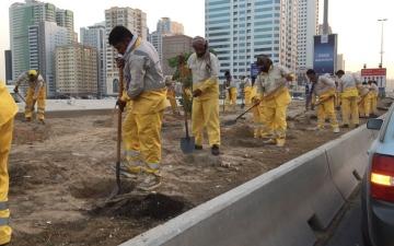 الصورة: بلدية الشارقة تزرع 3 آلاف زهرة في شارع الاتحاد باستخدام التقنيات الحديثة
