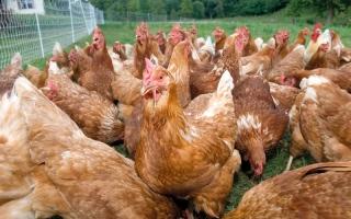 الصورة: «البيئة» تحظر استيراد الطيور الحية من روسيا