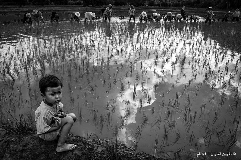 نغوين أنطوان - فيتنام