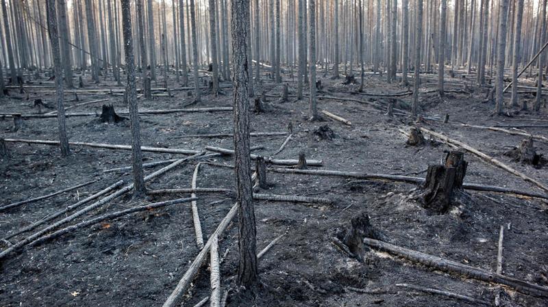 غابات محترقة في السويد بفعل ارتفاع درجات الحرارة.  أ.ف.ب