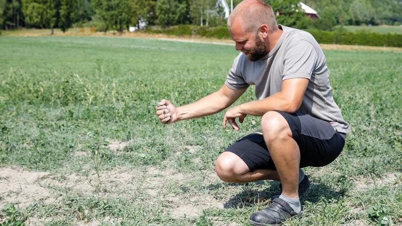 مُزارع نرويجي يتفحص التربة الجافة بفعل حرارة الجو.  إي.بي.إيه