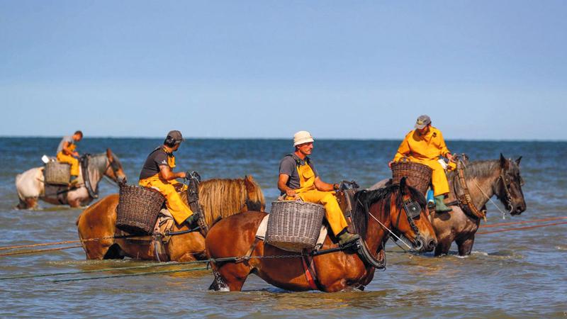 الصيد بالجياد في البحر مصدر جذب للسياح رويترز
