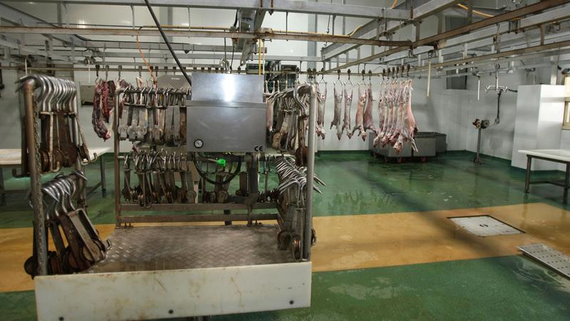 «الموارد البشرية» حظرت عمل الطلبة في سلخ الحيوانات وتقطيعها وسمطها وإذابة شحمها. أرشيفية