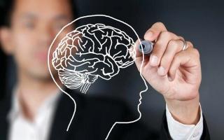 الصورة: 5 نصائح غذائية لصحة الدماغ