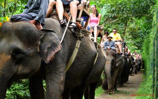 الصورة: تحذير من عدوى ينقلها الفيل الى الإنسان!