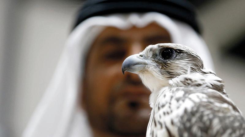 دائرة الثقافة والسياحة - أبوظبي تشارك في معرض الصيد والفروسية «3». من المصدر