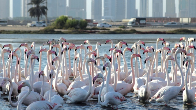 Wild Dubai»    a documentary trip in the city of nature reserves