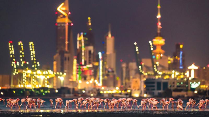 فيصل النوماس - الكويت