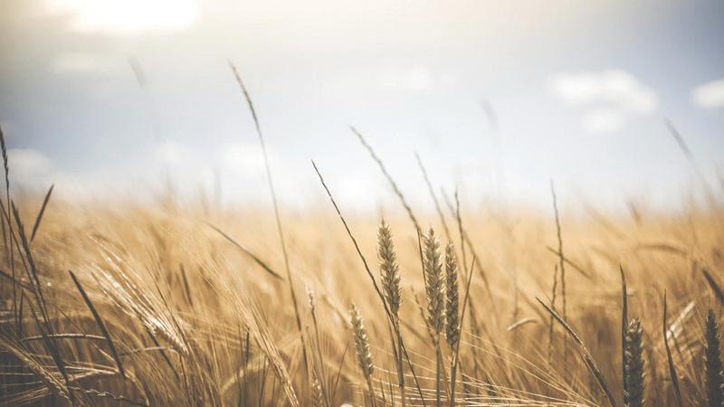تتيح التقنية الحديثة الوصول إلى محاصيل متنوّعة. أرشيفية