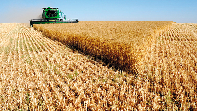 القمح الروسي يحظى بصفة تنافسية عالمية.  أرشيفية
