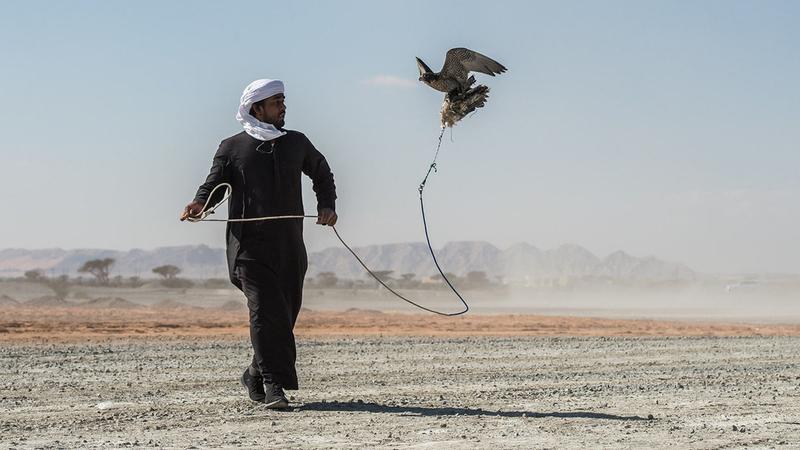 منافسات الناشئين أقيمت في اليوم الافتتاحي بمشاركة 40 طيراً. من المصدر
