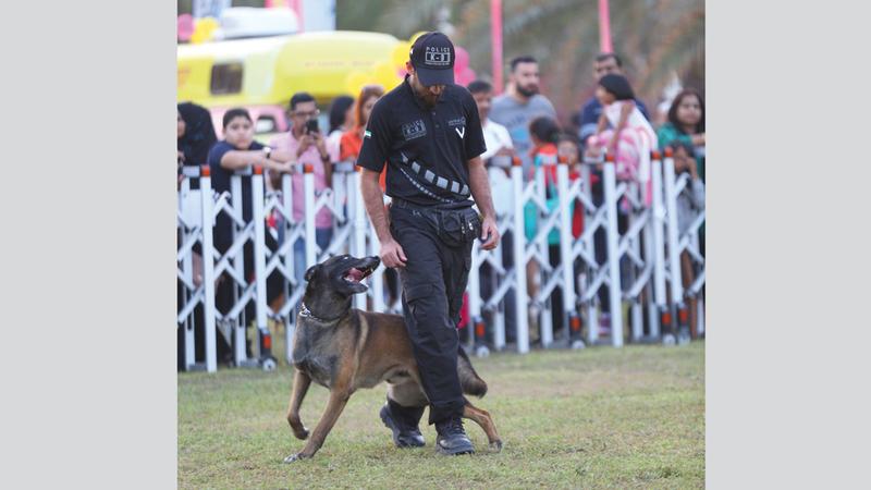 شرطة دبي تستخدم الكلاب لأغراض البحث عن متفجرات وتفتيشات احترازية.  من المصدر