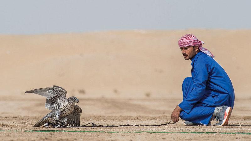 البطولة تحظى بمشاركة واسعة من نخبة صقارين وأجود أنواع الطيور. من المصدر