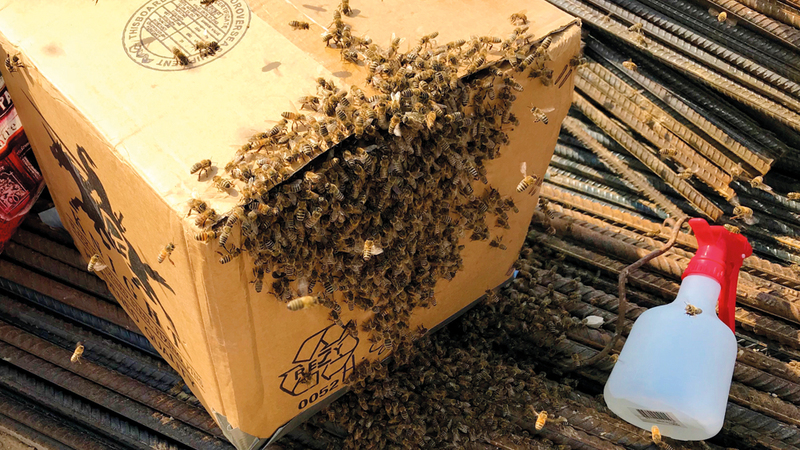 بعد نحو 15 دقيقة أصبحت الخلية جاهزة لتُنقل إلى حديقة النحل في المدينة المستدامة بدبي. من المصدر