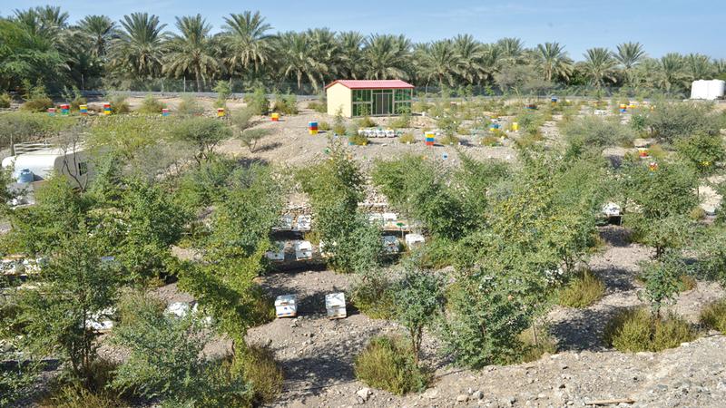 تمتد الحديقة على مساحة نحو 16 ألف متر مربع بين الجبال والمزارع المناسبة لأنواع مختلفة من النحل.