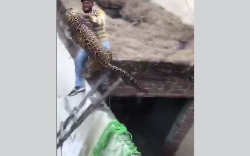 الصورة: بالفيديو.. نمر يثير الهلع والدمار في الهند