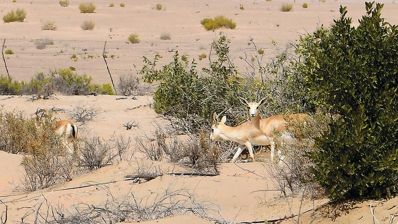 الغابة تعد النواة التي تورد الحيوانات للمحمية. تصوير: إريك أرازاس