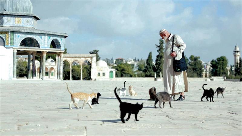 الحاج أبويونس يحرص يومياً على شراء اللانشون البقري لإطعامه لقطط المسجد الأقصى. من المصدر