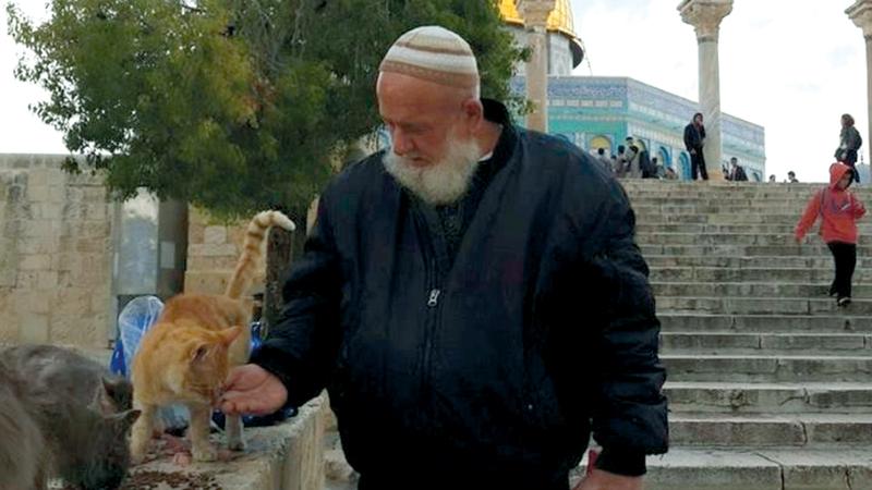 الحاج أبويونس وقطط الأقصى..  قصة يومية تشهدها ساحات المسجد. من المصدر