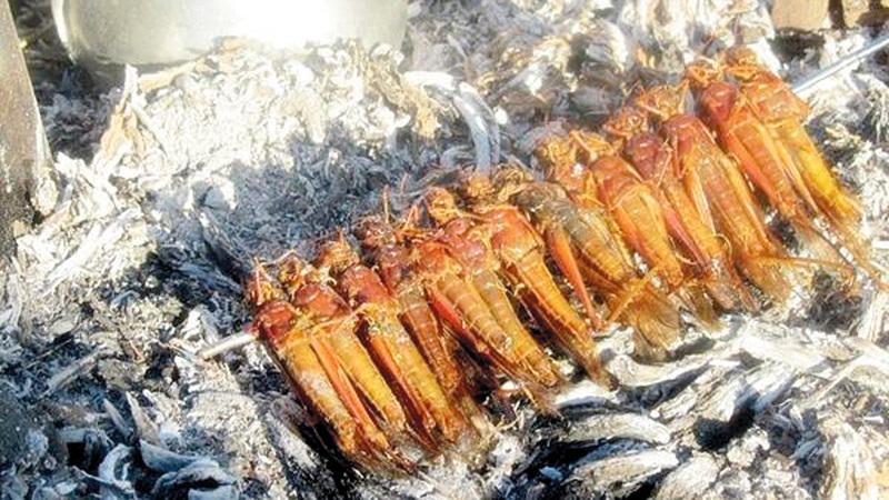 الشباب لا يتقبلون  منظر الجراد المطهو. الإمارات اليوم
