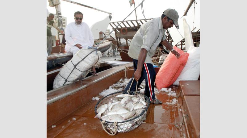 النظام الجديد يسجل بيانات الصيادين وخطة رحلتهم. تصوير: أسامة أبوغانم