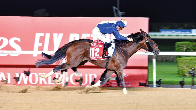 «ثندر سنو» أول حصان ينجح في الفوز بـ «كأس دبي العالمي» للمرة الثانية على التوالي. تصوير: أسامة أبوغانم