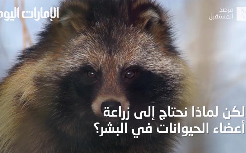 الصورة: بالفيديو.. زرع أعضاء الحيوانات في أجسام البشر قريباً