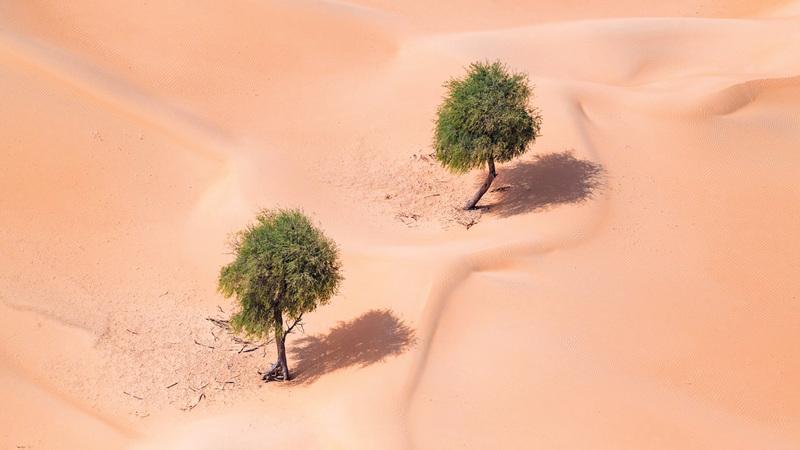 برنامج «لنتسامح مع بيئتنا البرية» سيركز على التعامل مع ظاهرتَي «التلوث الأبيض» والتعدي على الأشجار المحلية. من المصدر