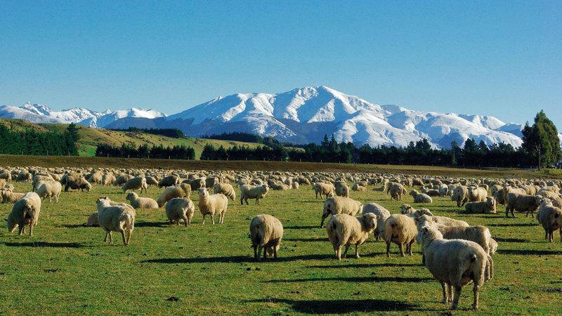 «البيئة» تُخضع الدول المصدرة للحيوانات الحية للتقييم والمتابعة. أرشيفية