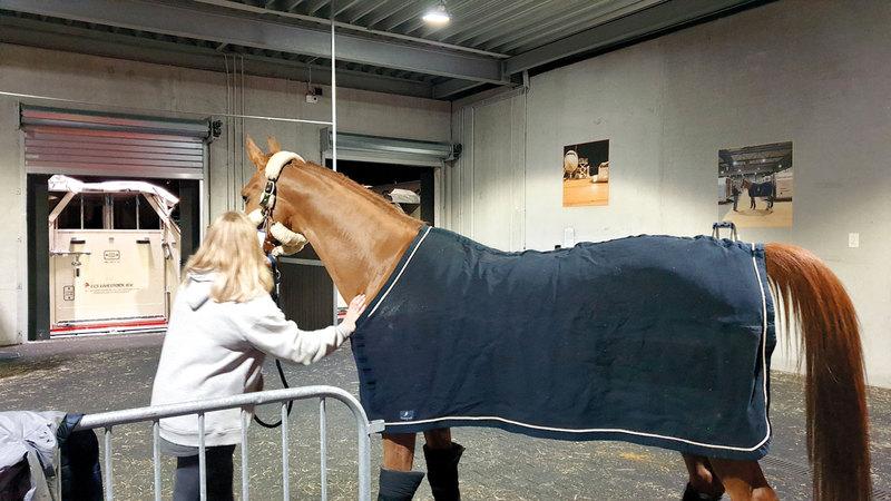 استخدمت الناقلة حل «الإمارات إكوين» لنقل الخيول، الذي يضمن توفير بيئة هادئة ومريحة لها طوال الرحلة. من المصدر.