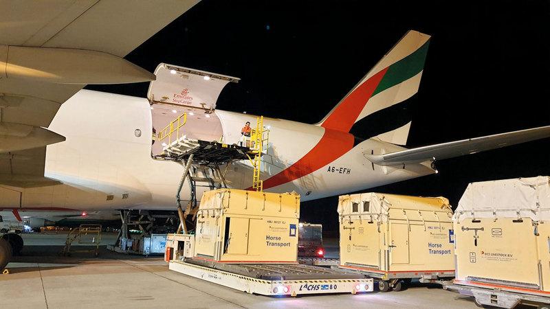 نقلت الإمارات للشحن الجوي نحو 2000 خيل خلال 2018-2019. من المصدر
