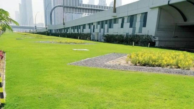مليونا متر مربع زيادة بالمساحات  المزروعة في دبي خلال عام