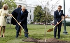 الصورة: تعليقات ساخرة بعد موت شجرة غرسها الرئيسان الأميركي والفرنسي