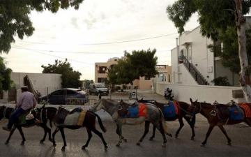 الصورة: انتقادات لحكومة اليونان لإساءة معاملة الحمير في جزيرة سياحية