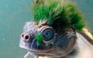 الصورة: بالصور.. حيوانات غريبة حول العالم